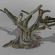 Fig Tree A Australian 3D SCAN 3d model