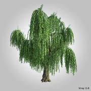 High realistic willow 3d model