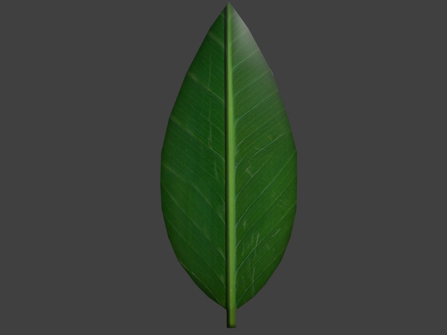 Grünes Blatt royalty-free 3d model - Preview no. 2