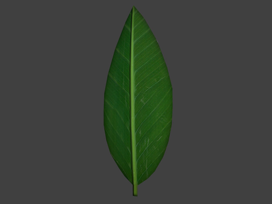 Grünes Blatt royalty-free 3d model - Preview no. 8