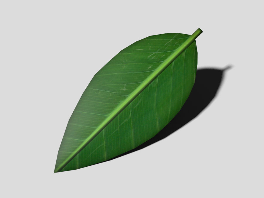 Green Leaf royalty-free 3d model - Preview no. 1