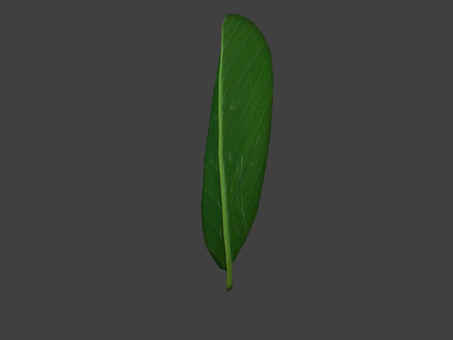 Grünes Blatt royalty-free 3d model - Preview no. 4