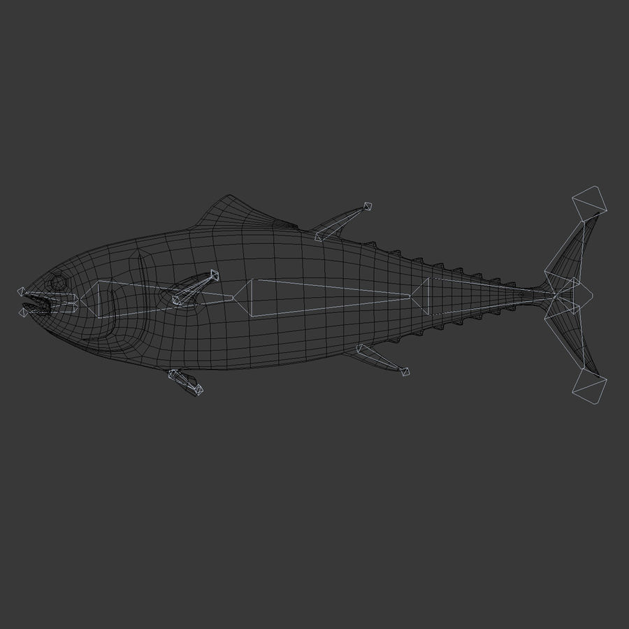 Giant Bluefin Tuna royalty-free 3d model - Preview no. 10