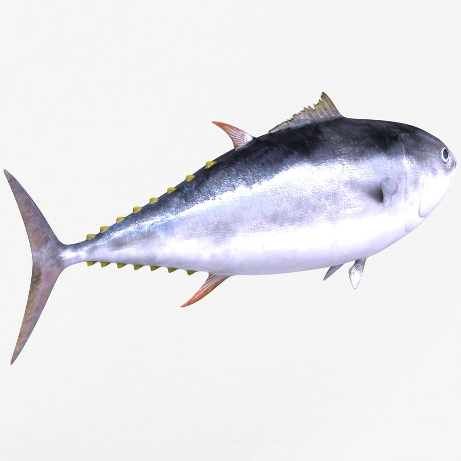 Giant Bluefin Tuna royalty-free 3d model - Preview no. 5