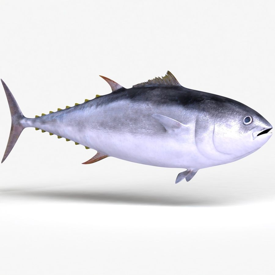 Giant Bluefin Tuna royalty-free 3d model - Preview no. 2