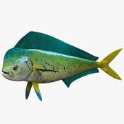 海豚鱼Mahi 3d model