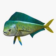Dolphinfish Mahi 3d model