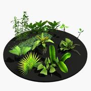 Vegetation plants 3d model