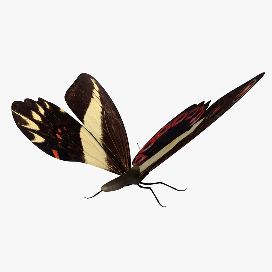 La farfalla royalty-free 3d model - Preview no. 3