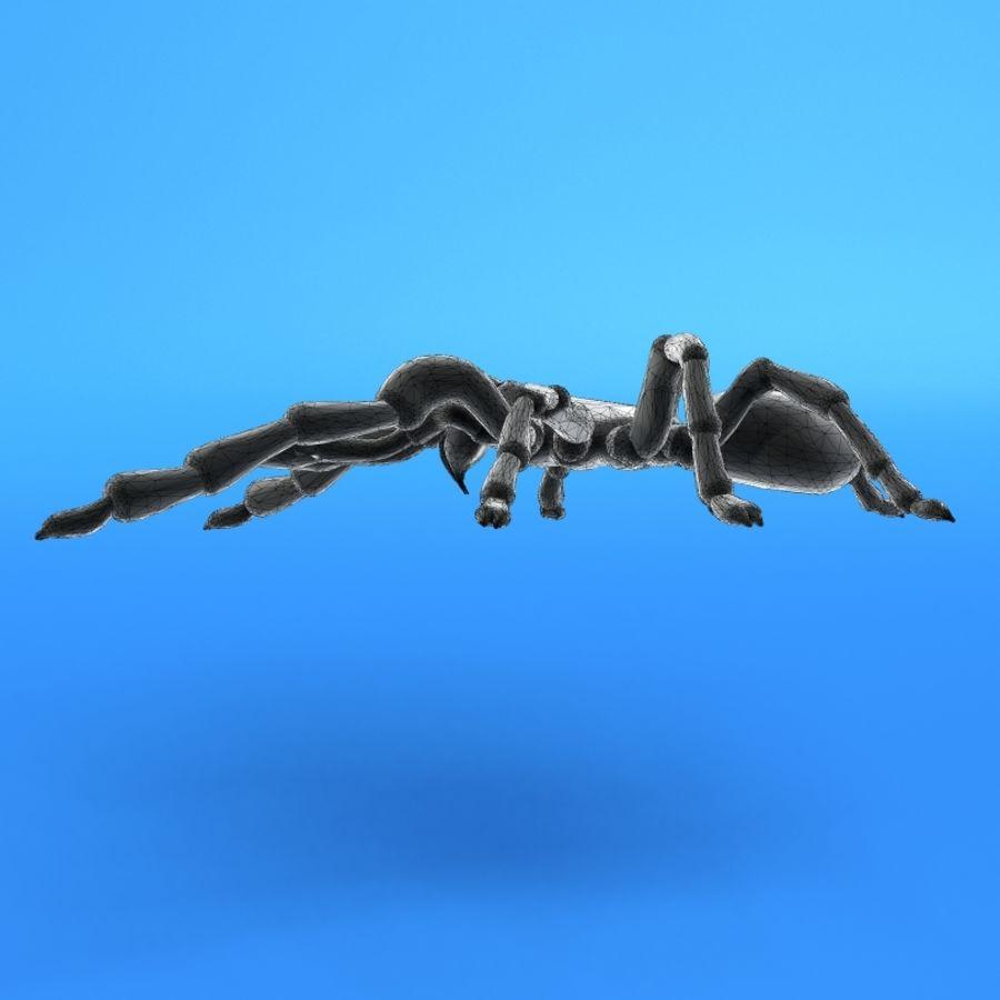 塔兰图拉毒蛛 royalty-free 3d model - Preview no. 6