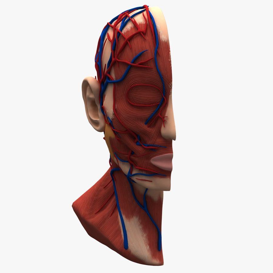 Anatomy Head Cutaway royalty-free 3d model - Preview no. 4