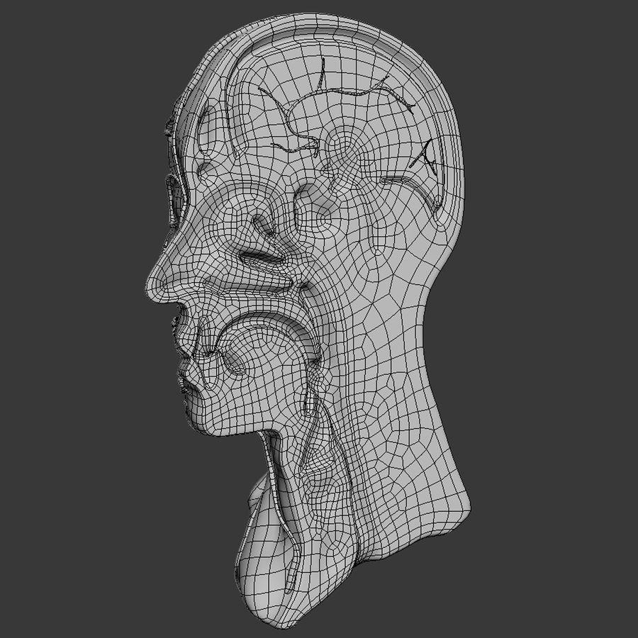 Anatomy Head Cutaway royalty-free 3d model - Preview no. 10