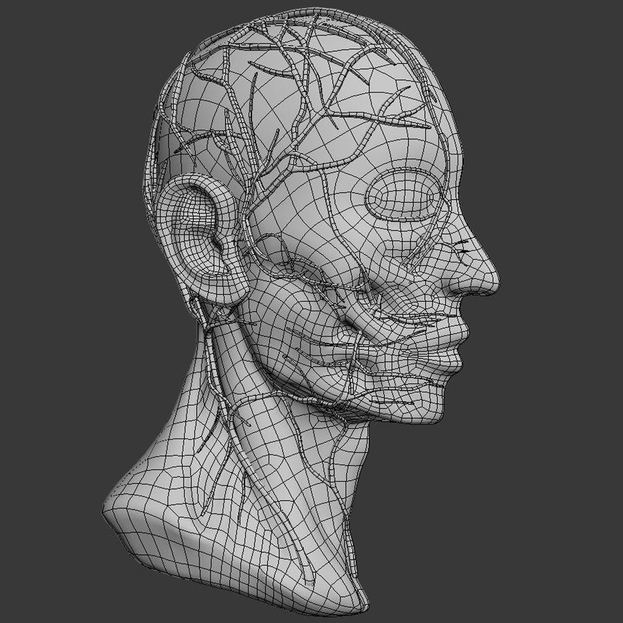 Anatomy Head Cutaway royalty-free 3d model - Preview no. 11