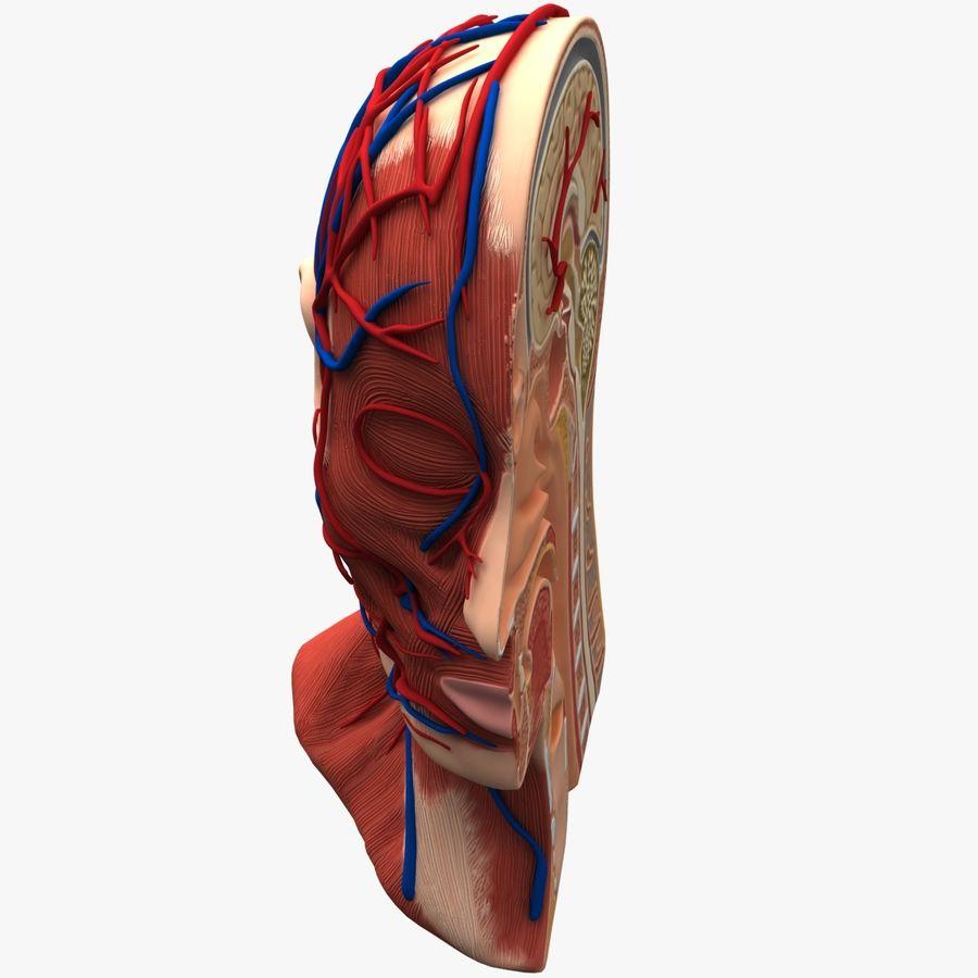 Tête d'anatomie en coupe royalty-free 3d model - Preview no. 6