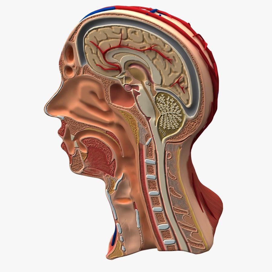 Anatomy Head Cutaway royalty-free 3d model - Preview no. 9
