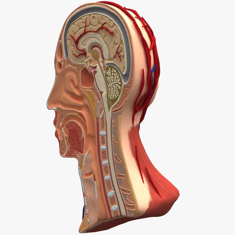 Anatomy Head Cutaway royalty-free 3d model - Preview no. 5