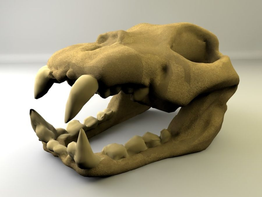 Crâne animal royalty-free 3d model - Preview no. 1