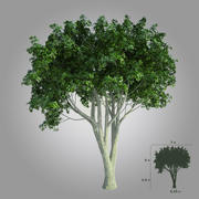 High realistic tree 001 3d model