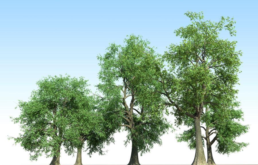 Kolekcja drzew jesionowych Fraxinus royalty-free 3d model - Preview no. 4