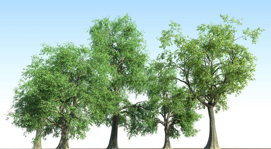 Kolekcja drzew jesionowych Fraxinus royalty-free 3d model - Preview no. 6