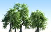 Kolekcja drzew jesionowych Fraxinus 3d model