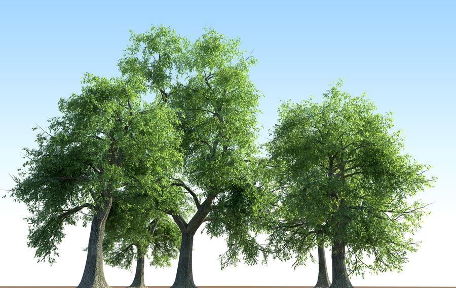 Kolekcja drzew jesionowych Fraxinus royalty-free 3d model - Preview no. 1