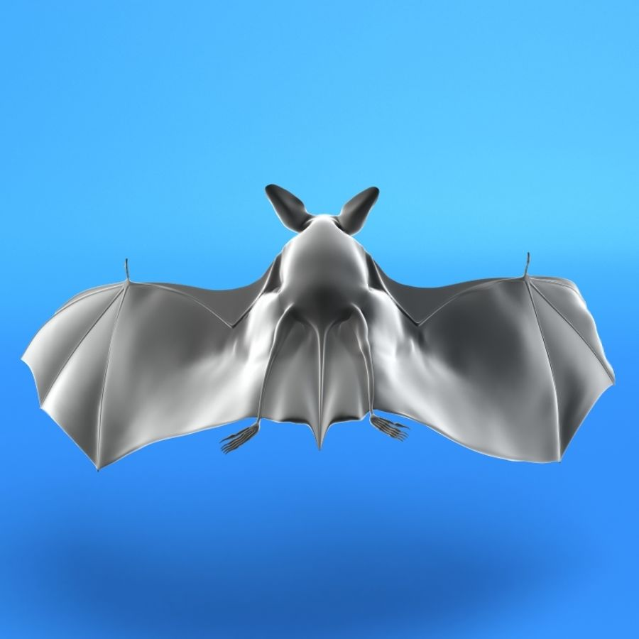 Flittermouse, Fledermaus royalty-free 3d model - Preview no. 4