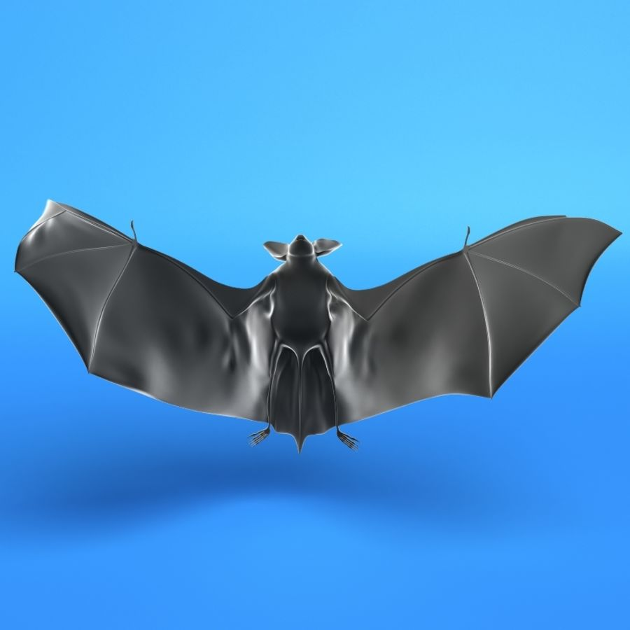 Flittermouse, Fledermaus royalty-free 3d model - Preview no. 3