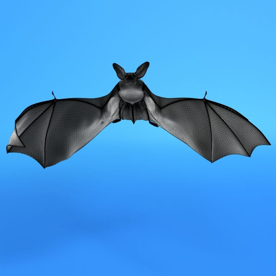 Flittermouse, Fledermaus royalty-free 3d model - Preview no. 2