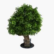 Дерево Клен Про 3d model