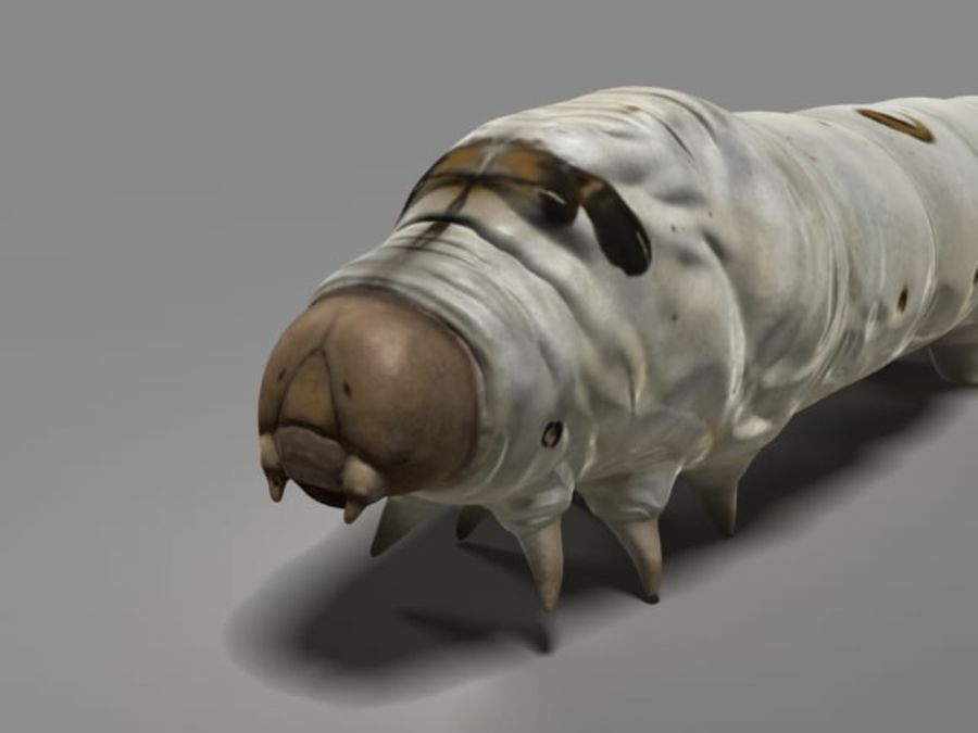 silkworm royalty-free 3d model - Preview no. 1