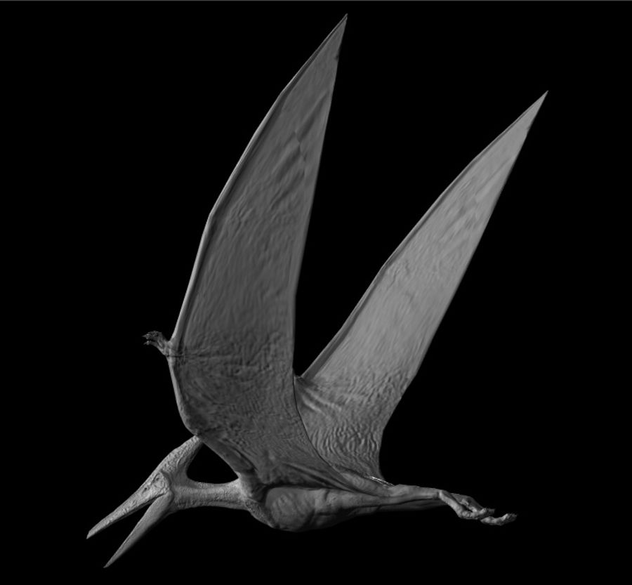 Jurassic Park - Pteranodon royalty-free 3d model - Preview no. 3