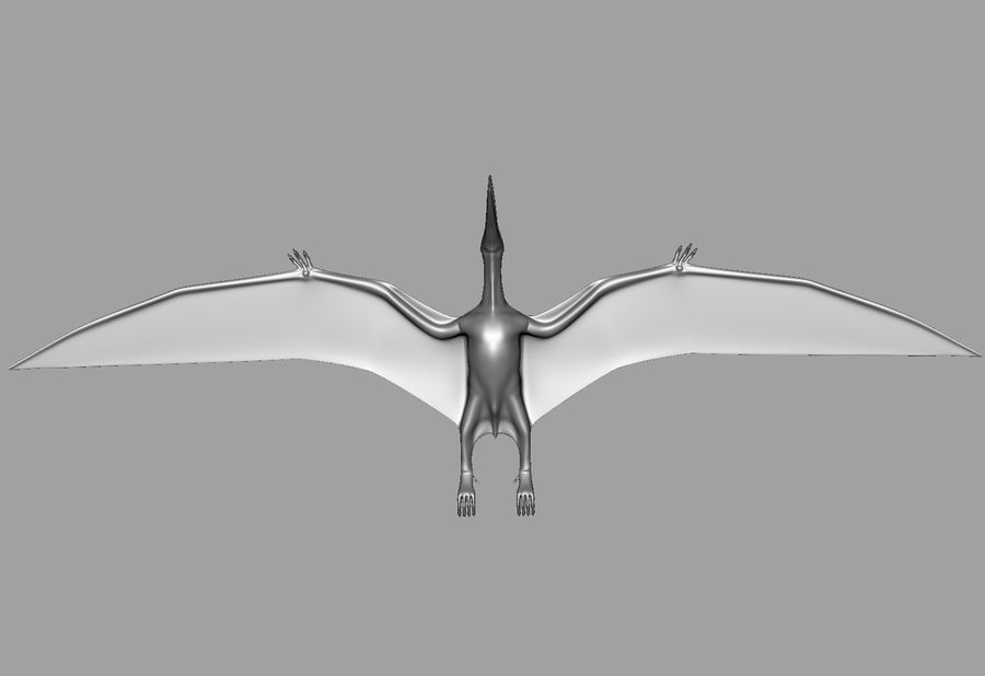 Jurassic Park - Pteranodon royalty-free 3d model - Preview no. 21