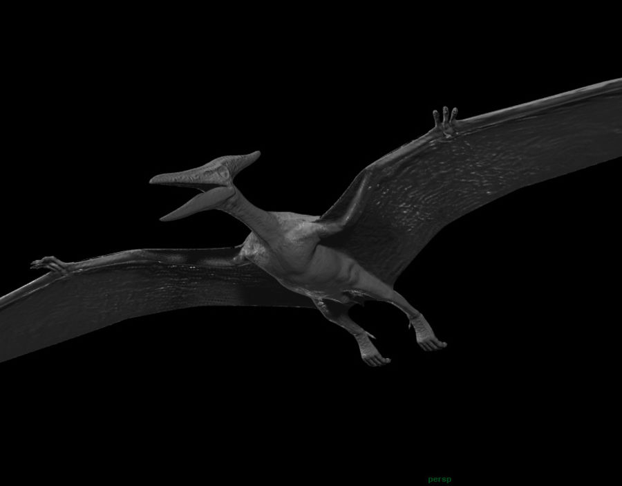 Jurassic Park - Pteranodon royalty-free 3d model - Preview no. 15