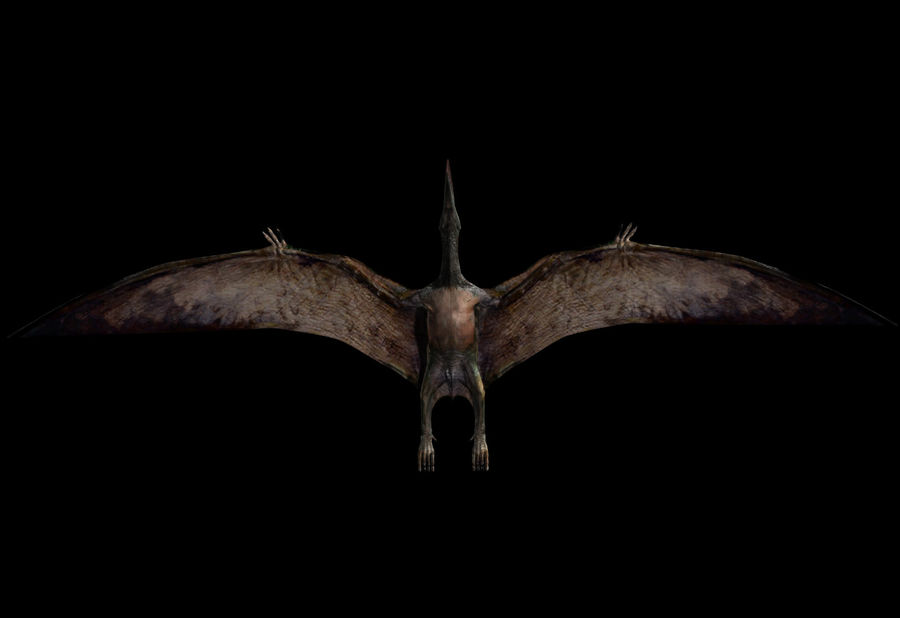 Jurassic Park - Pteranodon royalty-free 3d model - Preview no. 23