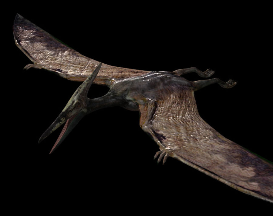 Jurassic Park - Pteranodon royalty-free 3d model - Preview no. 9