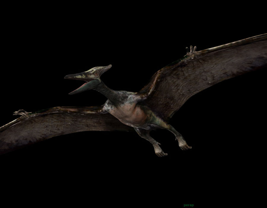 Jurassic Park - Pteranodon royalty-free 3d model - Preview no. 12