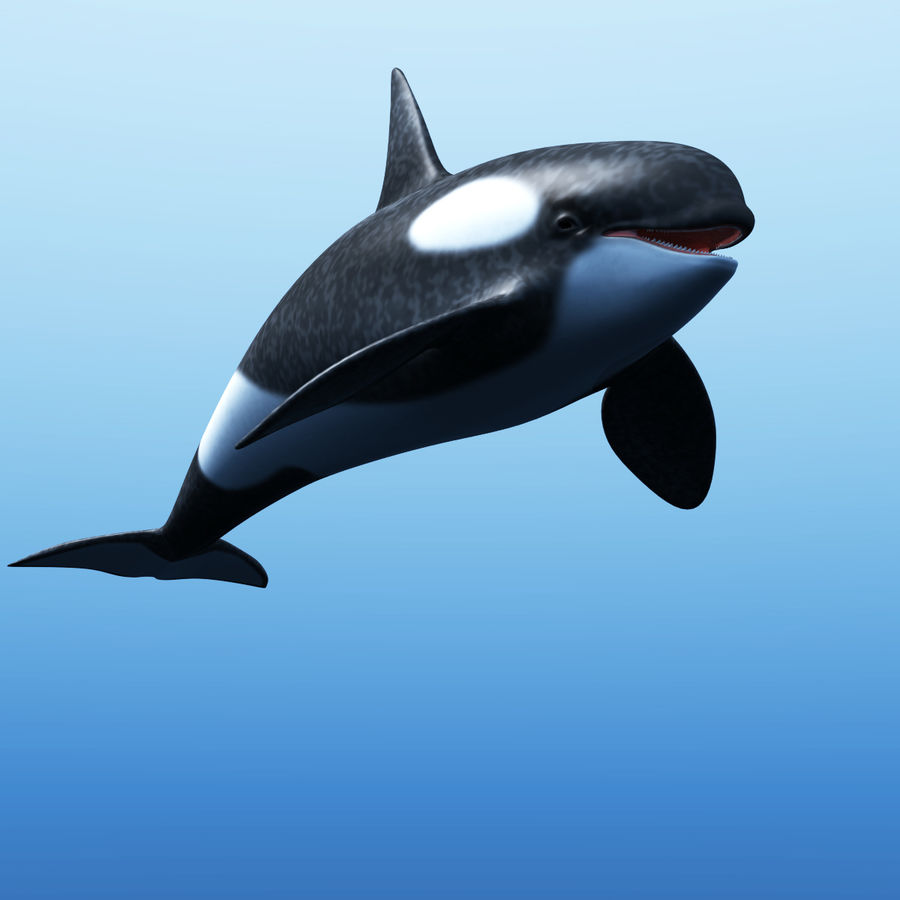 Orka royalty-free 3d model - Preview no. 1