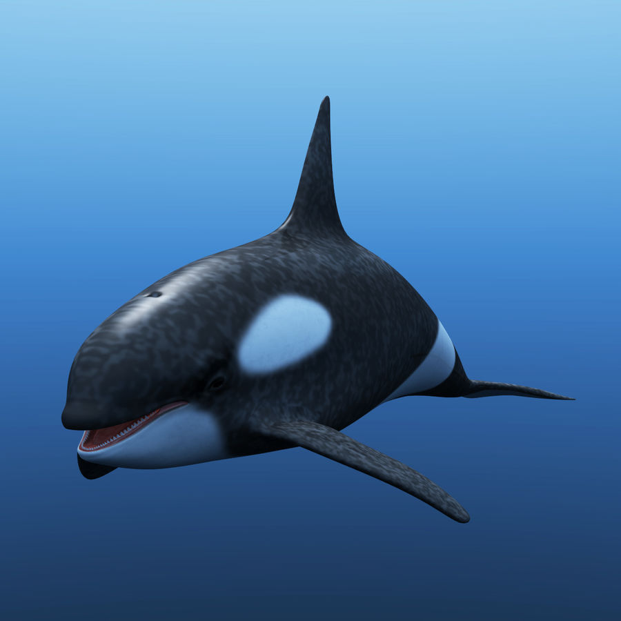 Orka royalty-free 3d model - Preview no. 2