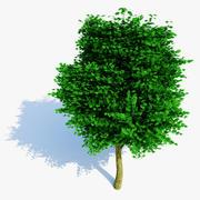 Realistischer Baum 3d model