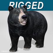 Svart björn 3d model