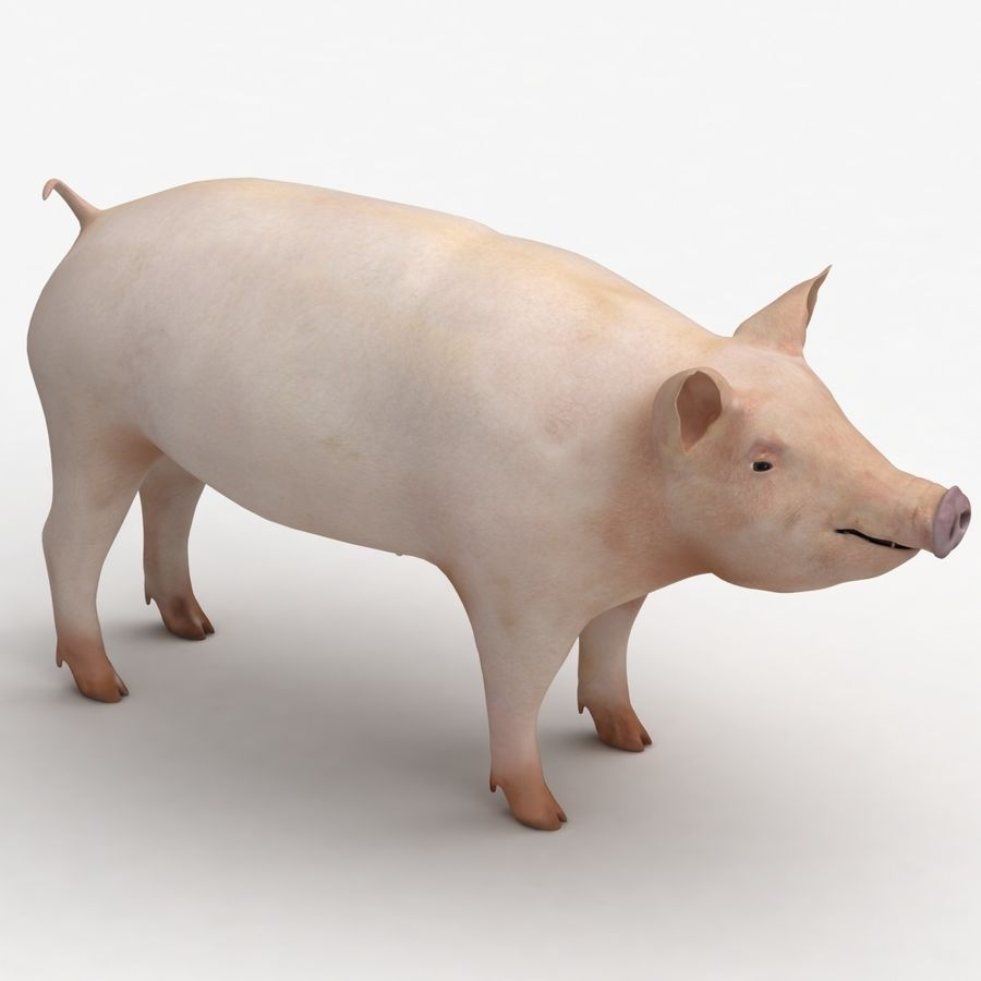Pig royalty-free 3d model - Preview no. 3
