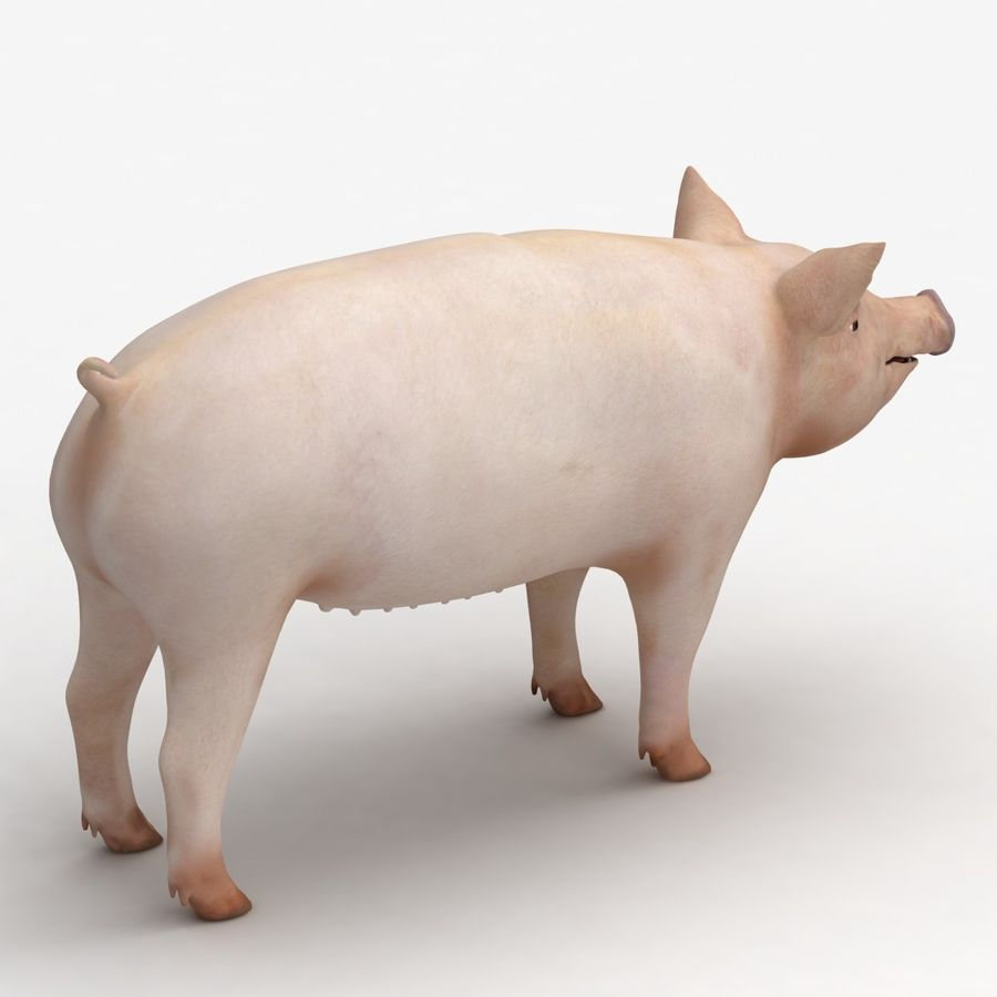 Pig royalty-free 3d model - Preview no. 7