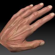 Hand Male 3d model