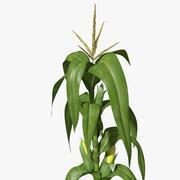 玉米秸秆 3d model