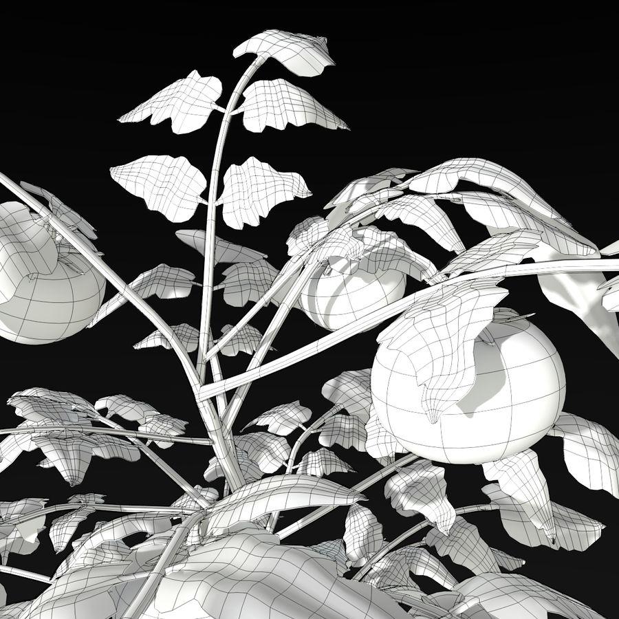 Roślina Pomidorowa royalty-free 3d model - Preview no. 7