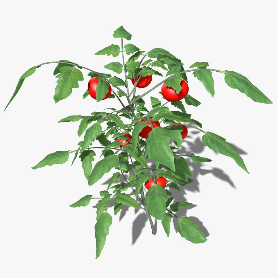 Roślina Pomidorowa royalty-free 3d model - Preview no. 2