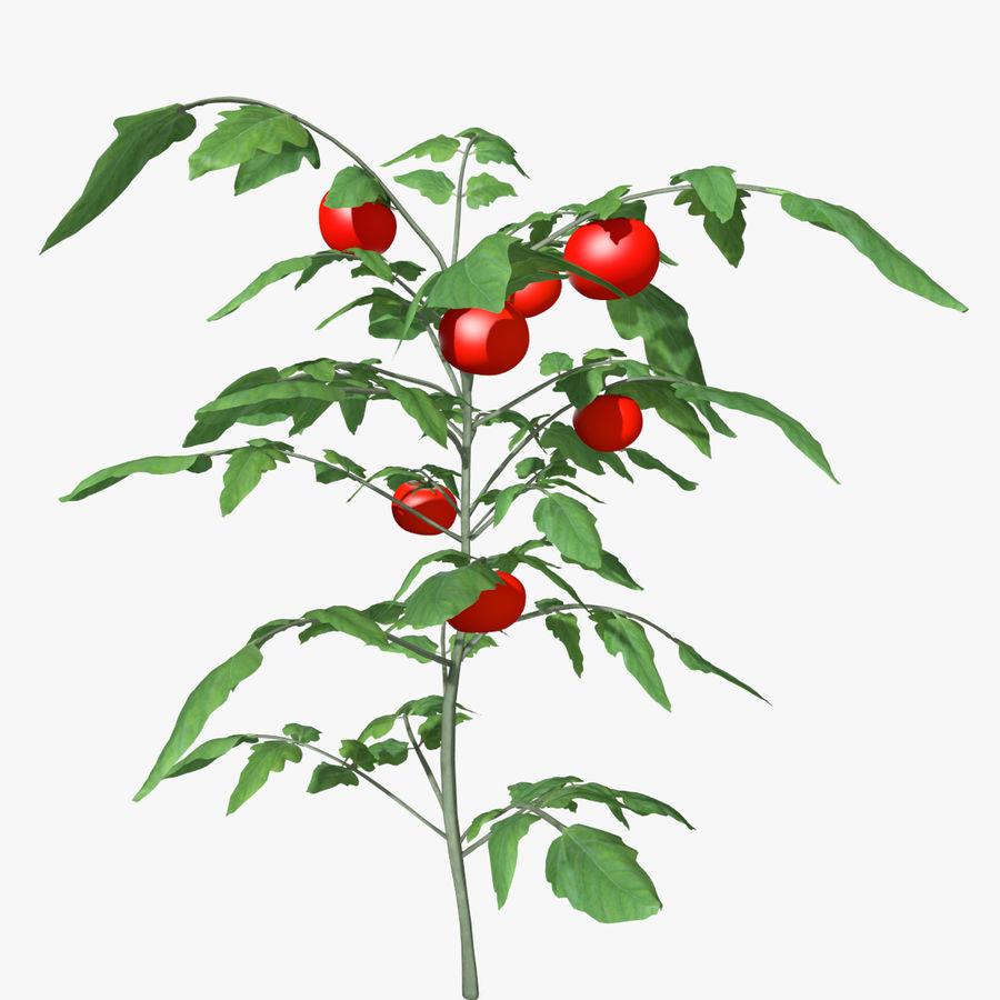 Roślina Pomidorowa royalty-free 3d model - Preview no. 1