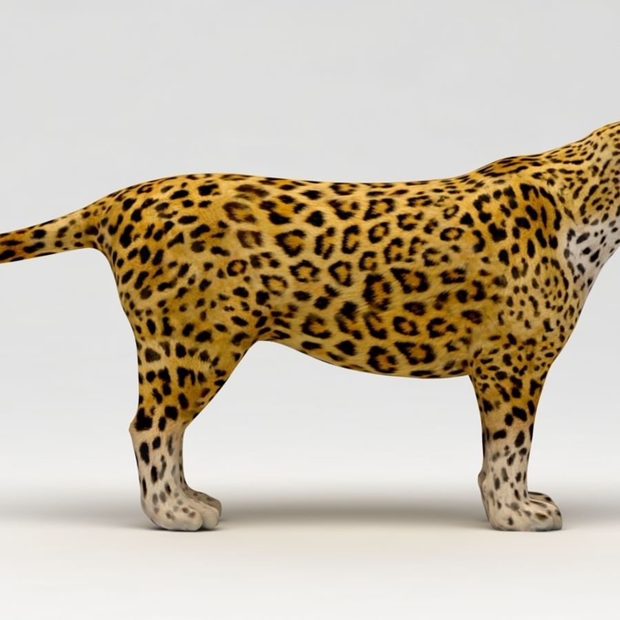 Leopard royalty-free 3d model - Preview no. 4