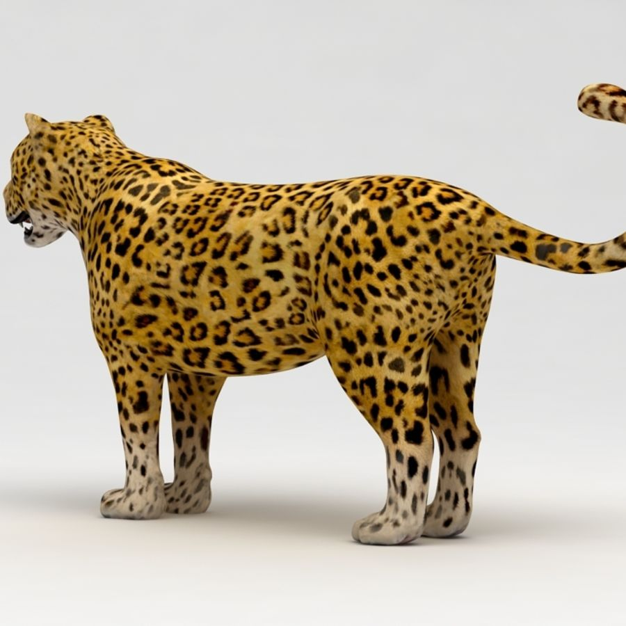 Leopard royalty-free 3d model - Preview no. 6